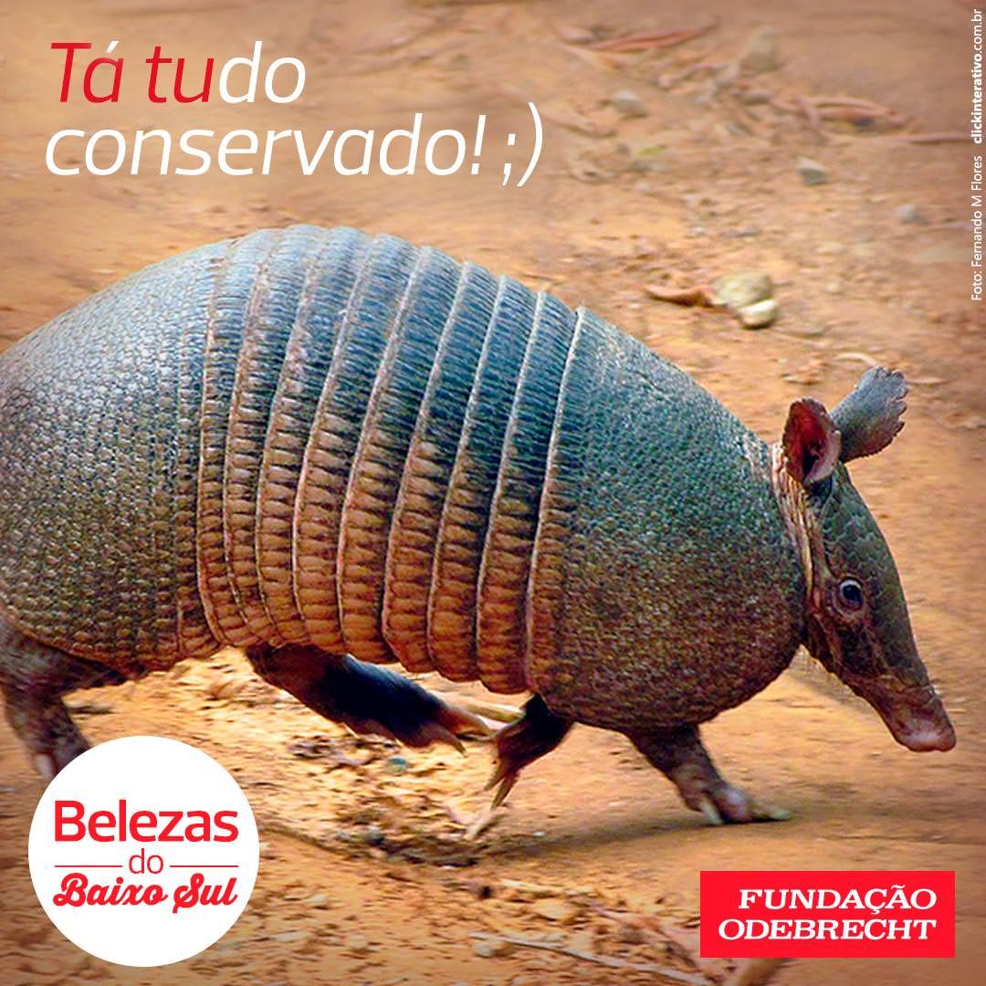 Não é só a flora que encanta no Baixo Sul da Bahia, onde está a Área de Proteção Ambiental (APA) do Pratigi. Com movimentos engraçados, o tatu é um mamífero presente nesta região, sendo mais um motivo para conservá-la. O clique foi feito lá pelo biólogo Fernando Flores.   #BelezasDoBaixoSul #Natureza #Sustentabilidade #Bahia #FundaçãoOdebrecht #OportunidadesQueTransformam  Conheça o nosso canal no YouTube: youtube.com/fundacaoodebrecht